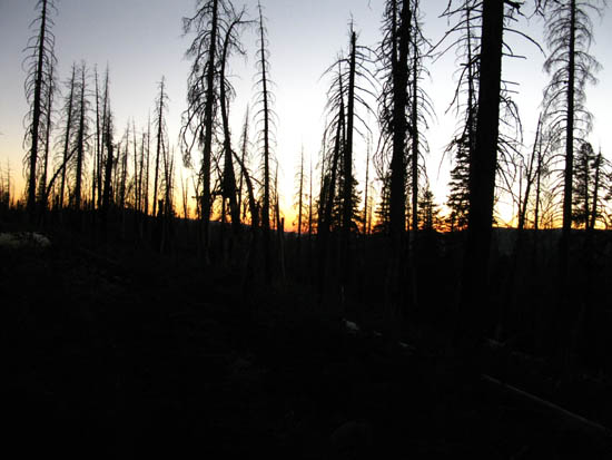 Burned forest between North Stanislaus River and Rock Lake, Carson Iceberg Wilderness.