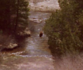 Bear Making Waves in the Silver King Creek