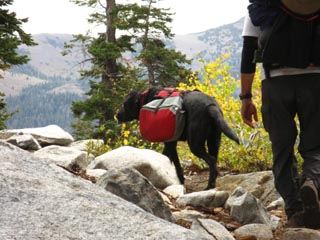 Peter and Jacob with their trail dog heading towards South Echo Summit on the combined PCT TYT trail.