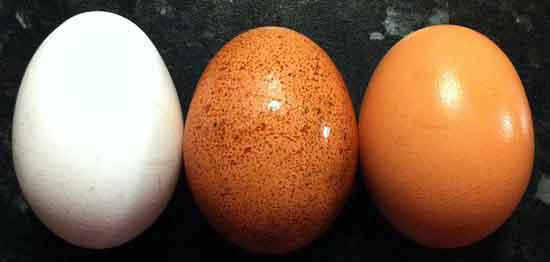Three chicken eggs, Timothy Titus.