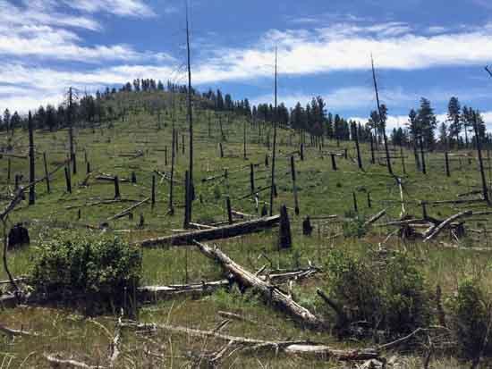 Forest regeneration failure after Idaho Complex Fire, by Kimberley Davis.