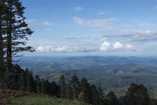 Forest from the top of Marys Peak, the highest point on Oregon's Coast Range, Credit to OSU & Lessa Clayton