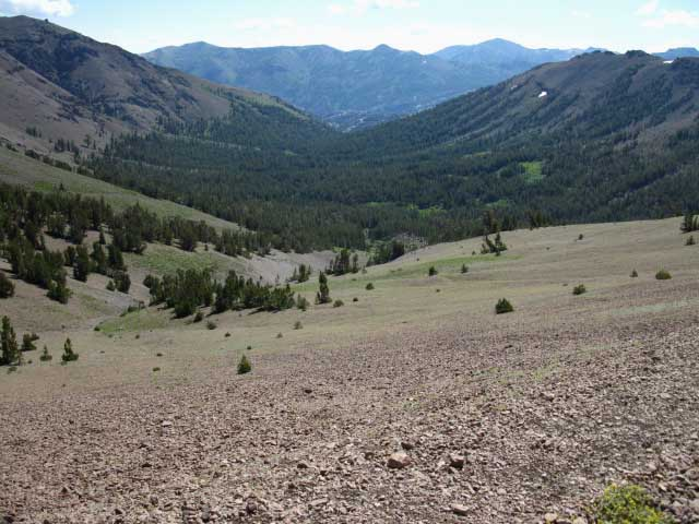 Looking East down Kennedy Canyon towards the West West Walker River.