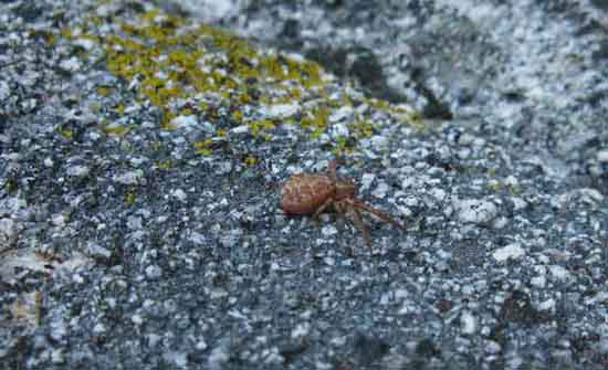 Little red spider scurrying away across a great granite boulder.