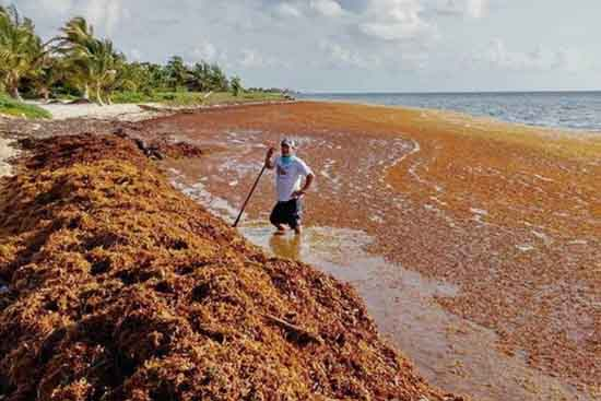 Sargassum Seaweed Grounding, Cancun, March 20, 2015, by Michael Owen.