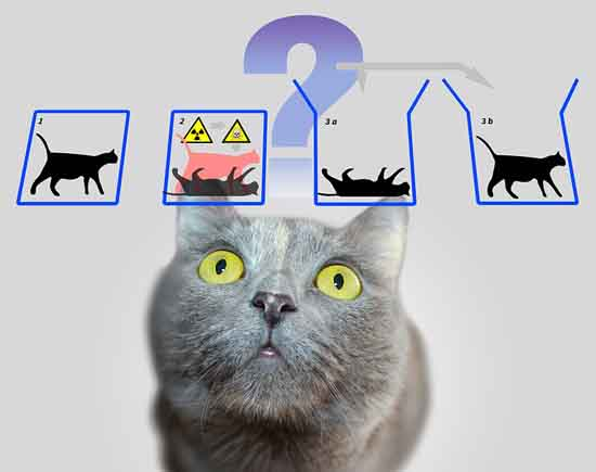 Schrödinger's cat not excited about quantum superposition, geralt, Pixabay.