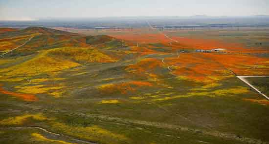 2019 Antelope Valley Superbloom of wildflowers and poppies, NASA/Jim Ross.